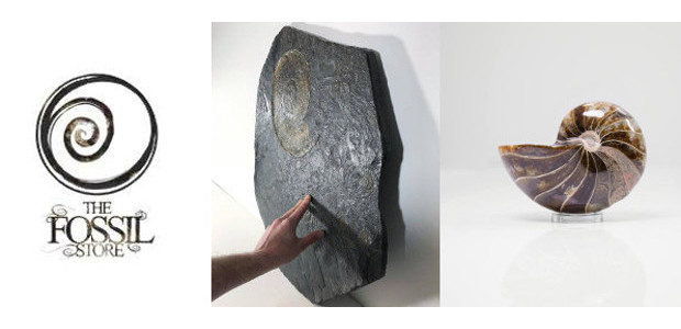 "The Fossil Store is a creatively rooted, authentic fossil company in the United Kingdom. Presenting interior-style objects whilst creating high-quality fossil statements for the world of interiors. www.thefossilstore.com ""Fossils never […]"